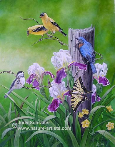 Oil Painting of flowers, birds and a butterfly by Judy Schrader