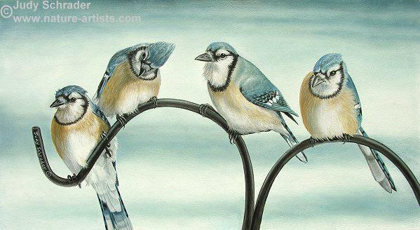 Oil Painting of a pair fo bluebirds  by Judy Schrader