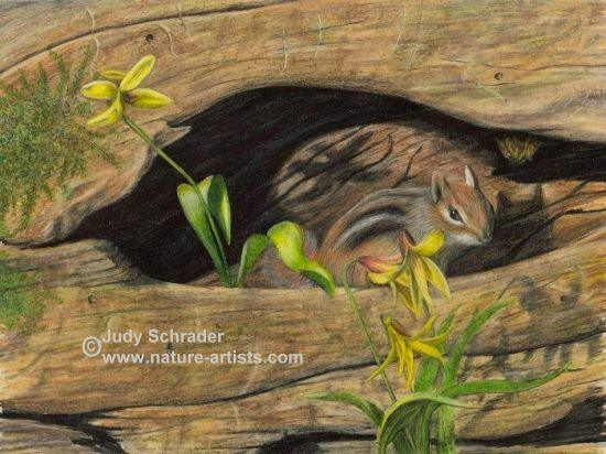 Original Colored Pencil Drawing of a little chipmunk in an old log by Judy Schrader. Wildlife and Nature Art