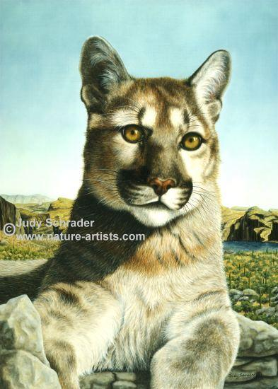 Oil Painting of a cougar by Judy Schrader
