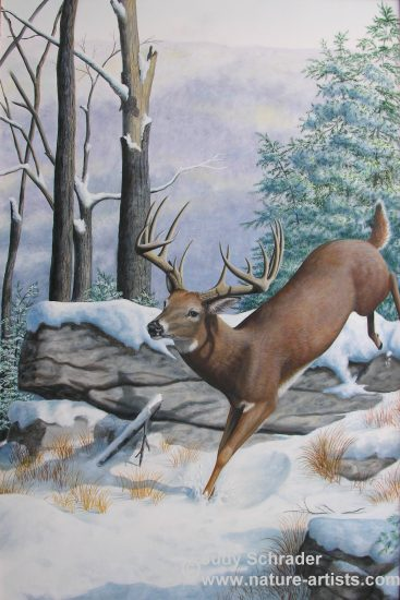 Original Oil Painting of a whitetail deer by Judy Schrader