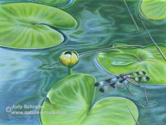 Colored Pencil Drawing of a dragonfly and lily pads, flowers and