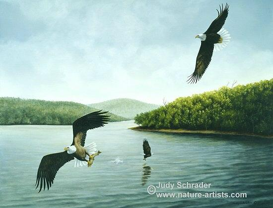 Oil Painting of bald eagles by Judy Schrader