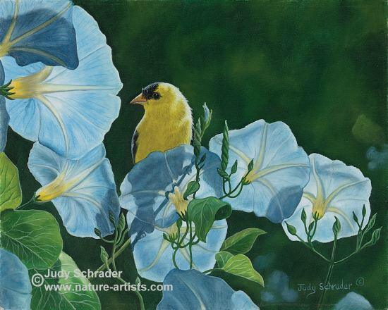 Oil Painting of blue morning glory flowers and a gold finch by Judy Schrader