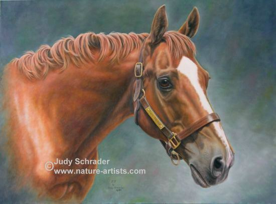 Oil Painting of a Thoroughbred named Jumping Jack Flash, commissioned by Dr. Blayne Bergenstock, painted by Judy Schrader
