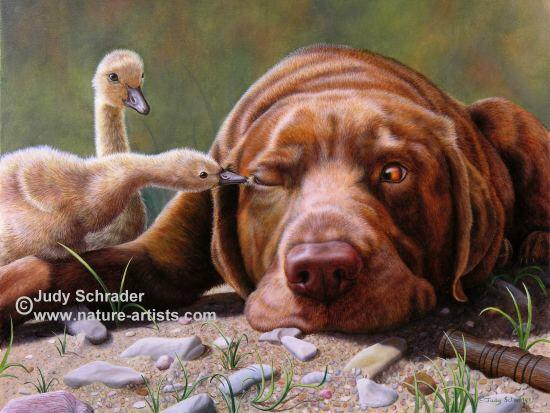 Nature art, Nature Artists, Wildlife Paintings, Wildlife Art by Judy Schrader