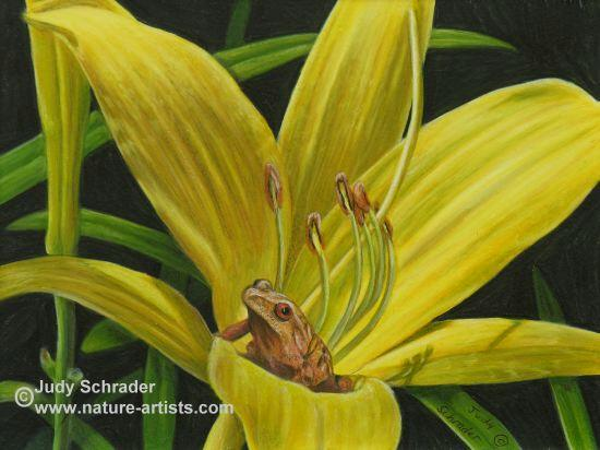 Colored Pencil Drawing of a frog in a lemon lily, flowers by Judy Schrader