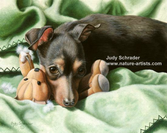 Oil Painting of an Miniature Pinscher by Judy Schrader
