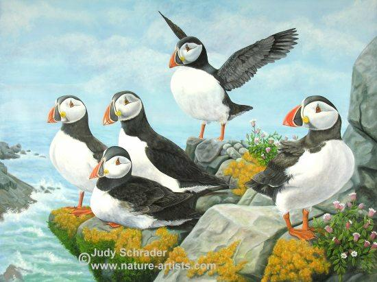 Oil Painting of puffins on a ledge by Judy Schrader