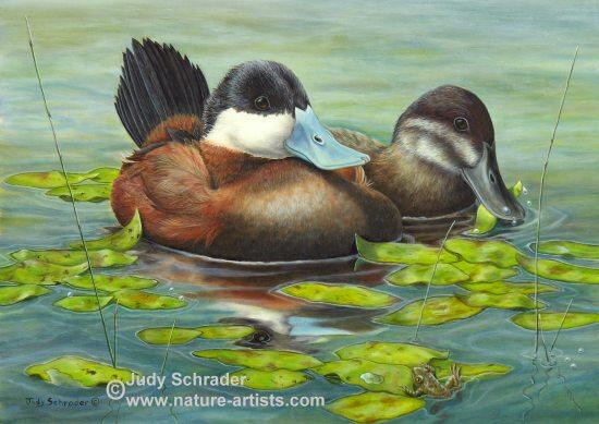 Oil Painting of a little pair of Ruddy Ducks by Judy Schrader