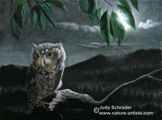Oil Painting of little Screech owl by Judy Schrader