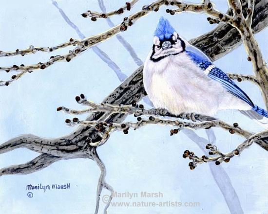 Acrylic Painting of Bluejay by Marilyn Marsh