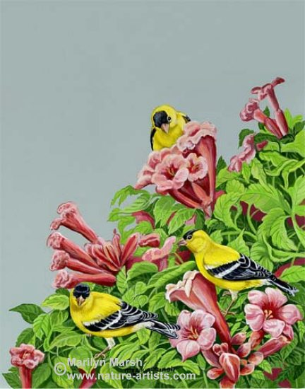 Acrylic Painting of a Goldfinch on trumpet vines by Marilyn Marsh