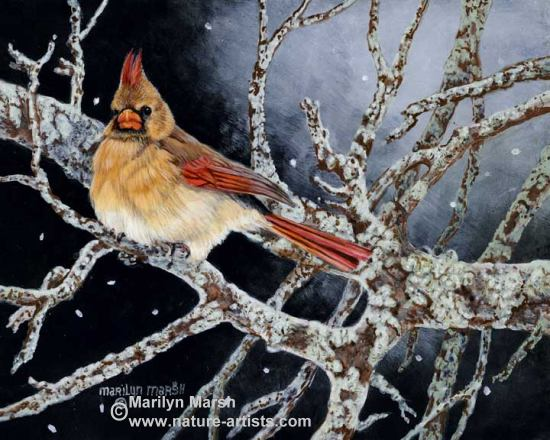 Acrylic Painting of a female Cardinal by Marilyn Marsh