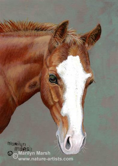Acrylic Painting of a sorrel colt by Marilyn Marsh