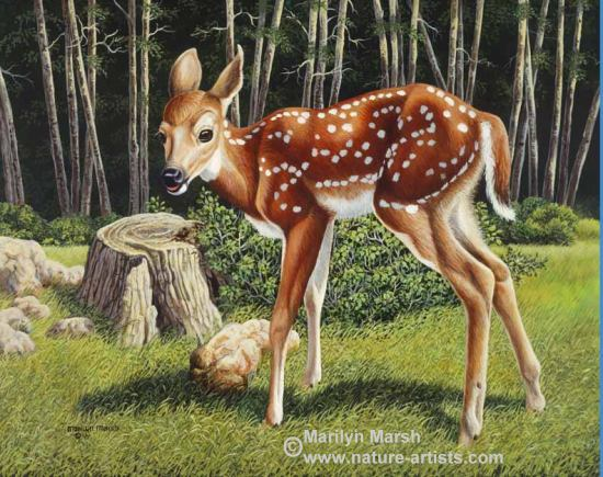 Nature Art, Nature Paintings, Wildlife Art, Wildlife Paintings, Original Acrylic Painting of a little fawn by Marilyn Marsh