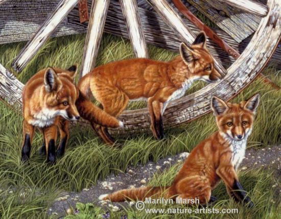 Nature Art, Nature Paintings, Wildlife Art, Wildlife Paintings, Original Acrylic Painting of three fox kits and a wagon wheel by Marilyn Marsh