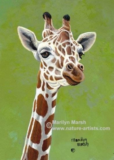 Nature Art, Nature Paintings, Wildlife Art, Wildlife Paintings, Original Acrylic Painting of a giraffe by Marilyn Marsh