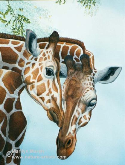 Nature Art, Nature Paintings, Wildlife Art, Wildlife Paintings, Original Watercolor Painting of a mama and baby giraffe by Marilyn Marsh