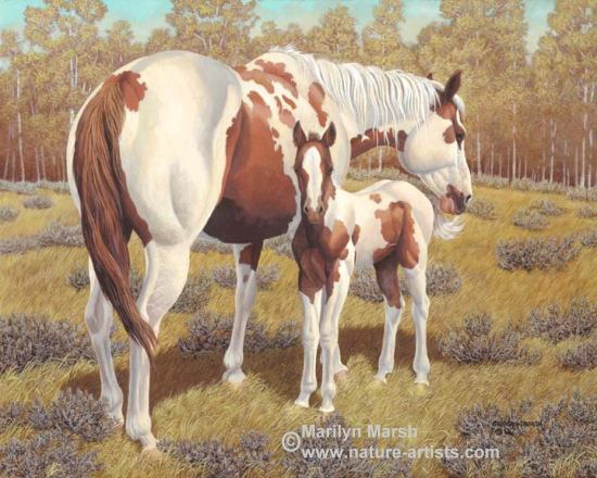Acrylic Painting of a paint mare and colt by Marilyn Marsh