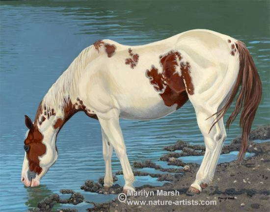 Acrylic Painting of a paint horse drinking water by Marilyn Marsh