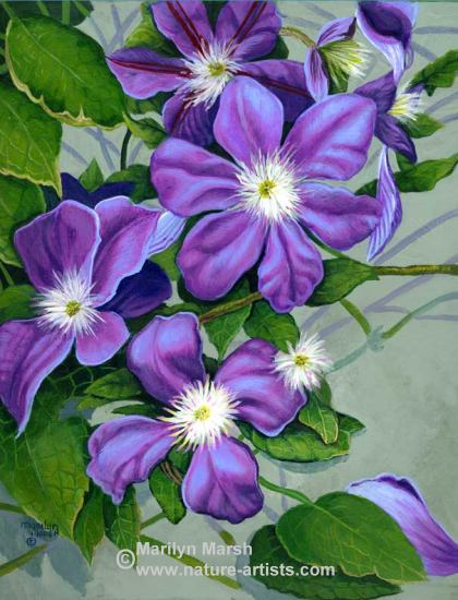 Acrylic Painting a Clematis Jackmanii by Marilyn Marsh
