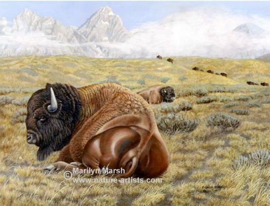 Nature Art, Nature Paintings, Wildlife Art, Wildlife Paintings, Original Acrylic Painting of a buffalo lying in a field by Marilyn Marsh
