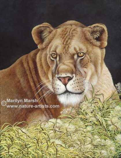 Acrylic Painting of a Lioness ~Shady Lady~ by Marilyn Marsh