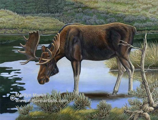 Nature Art, Nature Paintings, Wildlife Art, Wildlife Paintings, Original Acrylic Painting of a bull moose in the water by Marilyn Marsh