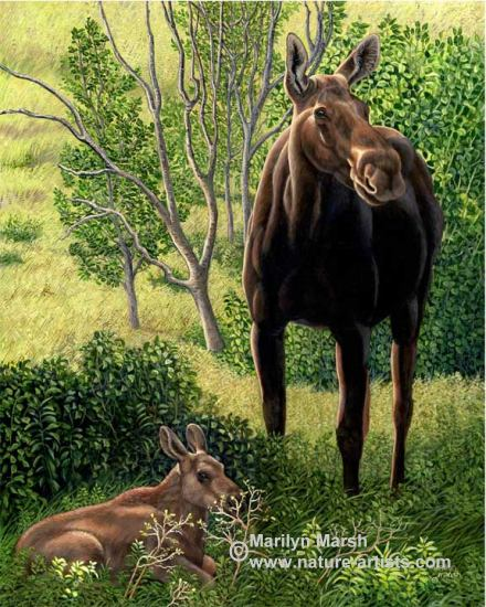 Nature Art, Nature Paintings, Wildlife Art, Wildlife Paintings, Original Acrylic Painting of a mama moose and her calf by Marilyn Marsh