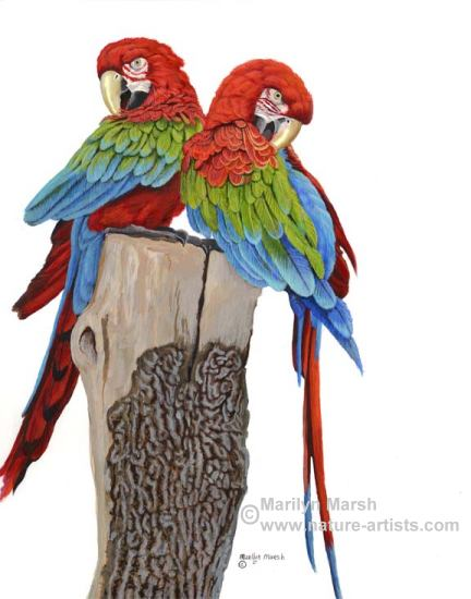 Acrylic Painting of Two Parrots by Marilyn Marsh
