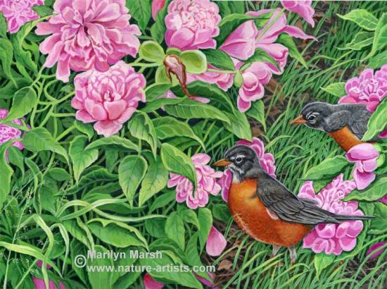 Acrylic Painting of Robins and Peonies by Marilyn Marsh