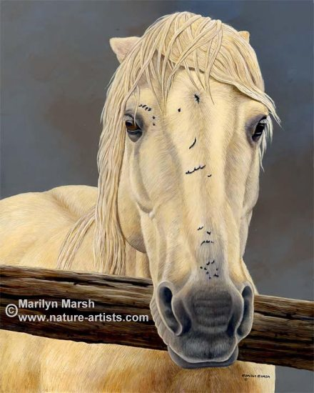 Acrylic Painting titled Ain't My First Rodeo, an old rodeo horse by Marilyn Marsh