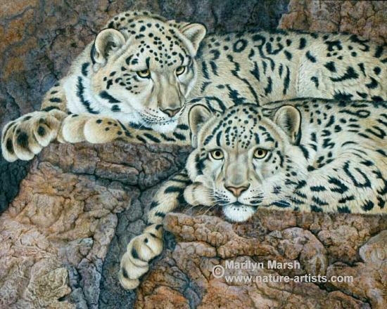 Acrylic Painting of two Snow Leopards by Marilyn Marsh