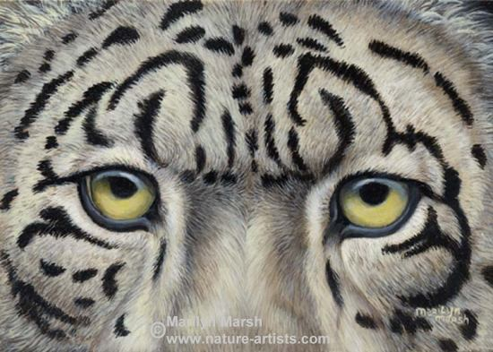 Acrylic Painting of snow leopard eyes by Marilyn Marsh