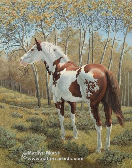 Acrylic Painting of paint horse in the sage brush by Marilyn Marsh
