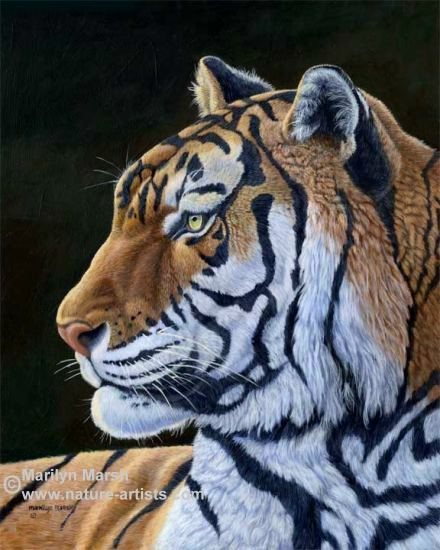 Acrylic Painting of a Large Tiger by Marilyn Marsh