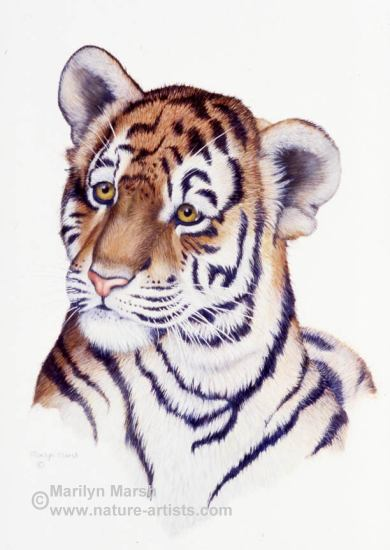 Acrylic Painting a tiger cub by Marilyn Marsh