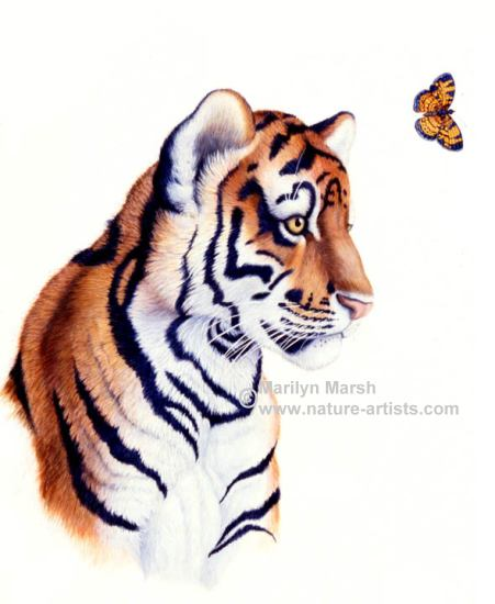 Acrylic Painting of a tiger looking at a butterfly by Marilyn Marsh