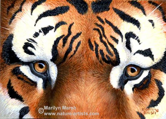 Acrylic Painting of tiger eyes by Marilyn Marsh