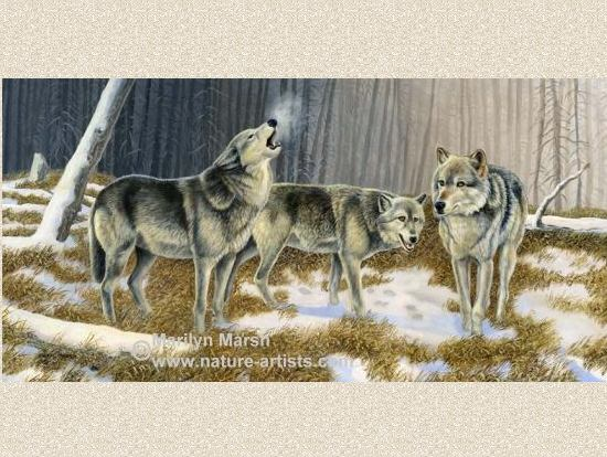 Nature Art, Nature Paintings, Wildlife Art, Wildlife Paintings, Original Acrylic Painting of three wolves by Marilyn Marsh