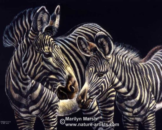 Nature Art, Nature Paintings, Wildlife Art, Wildlife Paintings, Original Scratchboard drawing of a Zebra mare with colt by Marilyn Marsh