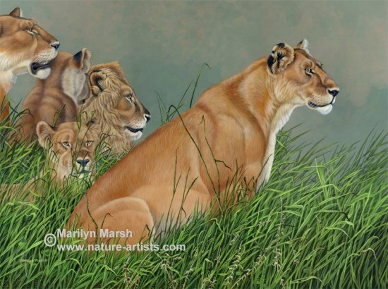 Original acrylic painting of a pride of lions, by Marilyn Marsh