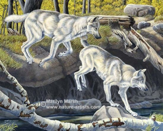 Nature Art, Nature Paintings, Wildlife Art, Wildlife Paintings, Original Acrylic Painting of two gray wolves by Marilyn Marsh