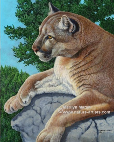 Original acrylic painting of a cougar in the pines by Marilyn Marsh