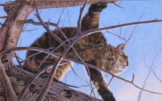 Oil Painting of a cat out on a limb by Judy Schrader