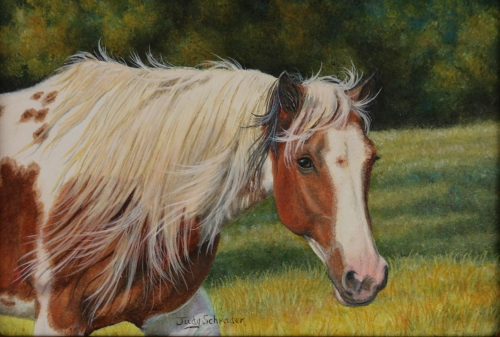 Oil Painting of a registered Paint horse by Judy Schrader