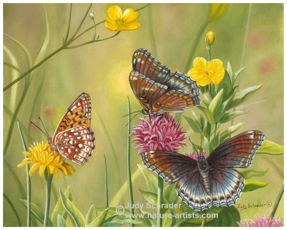Original Oil Painting of Butterflies by Judy Schrader