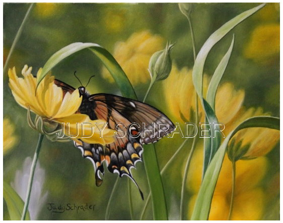 Original Oil Painting of a Black Swallowtail Butterfly by Judy Schrader