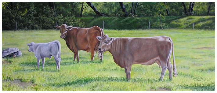 Original Oil Painting of Crossbred Charolais owned by Gene and Marilyn Marsh, painted by Judy Schrader